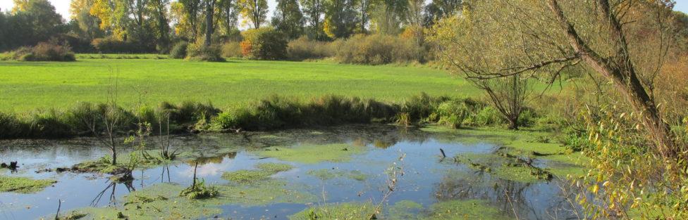 Zurück zur Natur – aber zu welcher? Renaturierung und Naturschutz in deutschen Flusslandschaften